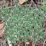 geometric plant